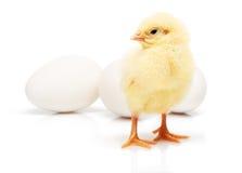 Galinha amarela pequena na frente de três ovos brancos da galinha Fotos de Stock