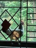 Galinha colada entre a barra de metal e o vidro de uma janela fotografia de stock royalty free