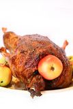 Galinha com maçãs Imagens de Stock
