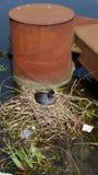 Galinha-d'água comum, chloropus do gallinula, ambiente, habitat, água, canal, reservatórios, reservatório, Londres, ninho, pato,  foto de stock royalty free