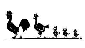 Galinha da galinha do galo Fotografia de Stock
