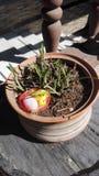 Galinha da Páscoa, decoração, jardim Foto de Stock