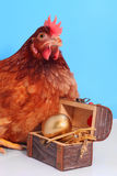 Galinha de Brown com o ovo de Easter dourado Imagens de Stock Royalty Free