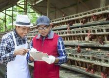 Galinha de dois fazendeiros Imagens de Stock Royalty Free