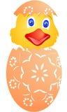 Galinha de Easter apenas chocada dos ovos Imagem de Stock Royalty Free
