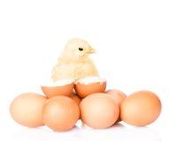 Galinha do bebê com ovos e casca de ovo Isolado no fundo branco Foto de Stock