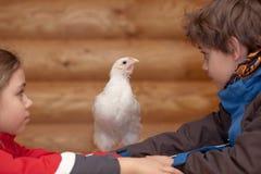 Galinha e crianças novas Foto de Stock