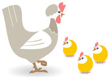 Galinha e galinhas Foto de Stock