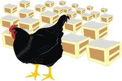 Galinha e ovos Foto de Stock