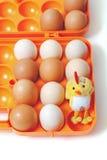 Galinha e ovos amarelos da galinha na bandeja plástica Imagem de Stock Royalty Free