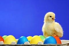 Galinha e ovos de easter pequenos Imagens de Stock Royalty Free