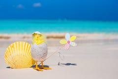 Galinha e shell amarelos pequenos na praia branca Imagem de Stock Royalty Free