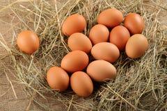 A galinha fresca eggs o alimento biológico Fotos de Stock