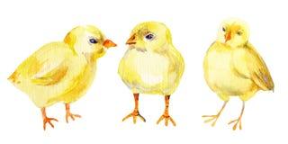 Galinha, galinha, galo, ovo Pintura da aguarela ilustração stock
