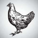 Galinha Hen Drawing Illustration Vetora ilustração stock