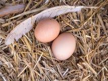A galinha marrom do close-up eggs em uma cama da palha Fotos de Stock Royalty Free