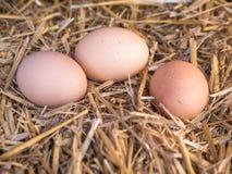 A galinha marrom do close-up eggs em uma cama da palha Fotos de Stock