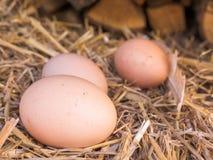 A galinha marrom do close-up eggs em uma cama da palha Imagem de Stock
