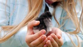 Galinha preta e amarela recém-nascida nas mãos das crianças Pintainho do bebê em um close up humano da palma, no fundo borrado video estoque