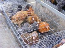 Galinha viva na venda da gaiola no mercado dos pássaros Fotografia de Stock Royalty Free