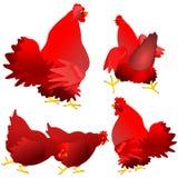 Galinhas e galos vermelhos Fotos de Stock Royalty Free