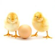 Galinhas e ovo imagem de stock royalty free