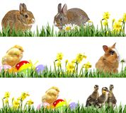 Galinhas e ovos da páscoa recém-nascidos, coelhos pequenos e ovos da páscoa Imagem de Stock Royalty Free