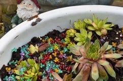 Galinhas & flores dos pintainhos Fotos de Stock