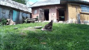 Galinhas na jarda da casa Ucrânia, Podillya, Khmelnytskyi filme
