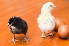 Galinhas pequenas brancas e pretas e dois ovos da galinha em uma superfície de madeira fotos de stock