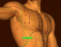 Acupuncture Point GB24 Riyue, 3D Illustration, Brown Background stock photo