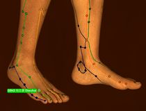 Acupuncture Point GB42 Diwuhui, 3D Illustration, Brown Backgroun stock photography