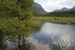 Gallantin河在Bozeman,蒙大拿美国 图库摄影