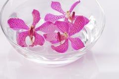 Galleggiamento capo dell'orchidea viola Fotografia Stock