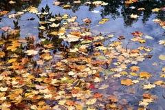 Galleggiamento dei fogli di autunno Fotografia Stock
