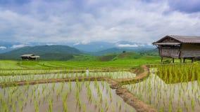 Galleggiamento delle nuvole dell'azienda agricola e di nimbus del riso del terrazzo di lasso di tempo della Tailandia Fotografie Stock Libere da Diritti
