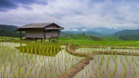 Galleggiamento delle nuvole dell'azienda agricola e di nimbus del riso del terrazzo di lasso di tempo della Tailandia Immagini Stock