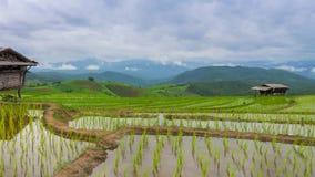 Galleggiamento delle nuvole dell'azienda agricola e di nimbus del riso del terrazzo di lasso di tempo della Tailandia Fotografia Stock Libera da Diritti