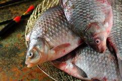 Galleggiante crucian della gabbia della canna da pesca del gruppo Immagine Stock Libera da Diritti