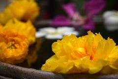 Galleggiante dei fiori Fotografia Stock