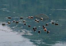 Galleggianti di rosso e neri allegati ad una rete da pesca Immagini Stock Libere da Diritti