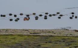 Galleggianti di rosso e neri allegati ad una rete da pesca Immagine Stock Libera da Diritti