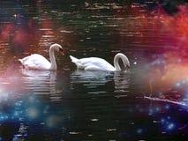 Gallen, hösten, härligt svanar, sjön, naturen, skönhet, förälskelse, inlove royaltyfria bilder