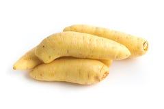 Gallerförsedd potatis Baroa arkivbilder