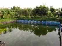 Gallerfisken i burar i en lantgård i Thailand Arkivfoton