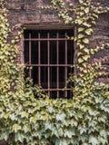 gallerförsett fönster Royaltyfri Foto