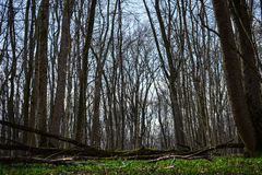 Galleria degli alberi Fotografie Stock Libere da Diritti