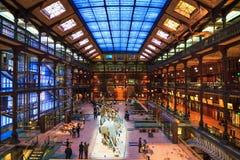 Galleria di evoluzione Immagine Stock