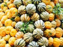 Galleriapumpor för garnering av halloween festar bakgrund Arkivfoto