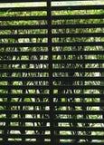 Gallerplankor som täckas av vegetation arkivbilder